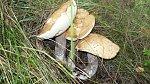 images37.fotosik.pl/1000/bdea9078c763562dm.jpg