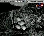 http://images37.fotosik.pl/102/bfa2a54eb6ceccfbm.jpg