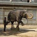 Cviceniu sloniu. ZOO w Libercu. #Słoń #ZOO #Liberec