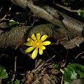 PZK #zielone #wiosenny #kwiat #kwiatek #ujęcie
