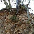 fantastyczne kształty korzeni drzew #KazimierzDolny