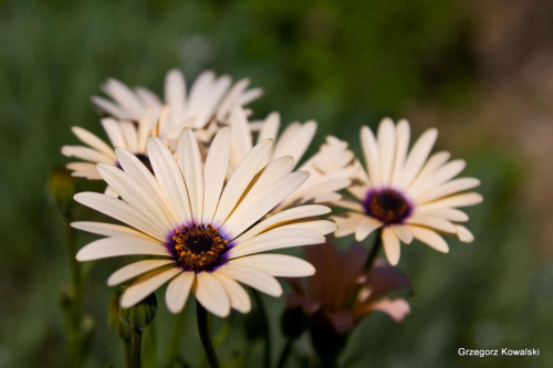 #kwiaty #ogród #przyroda