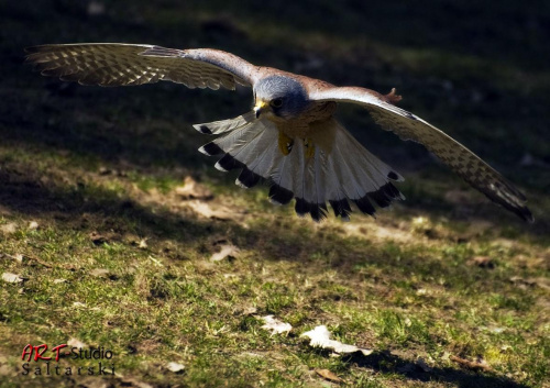 Przepraszam nie jestem ornitologiem ...nie wiem co to za Ptak. Ale leciał nisko :) #Naris #Ptak #Zwierzęta