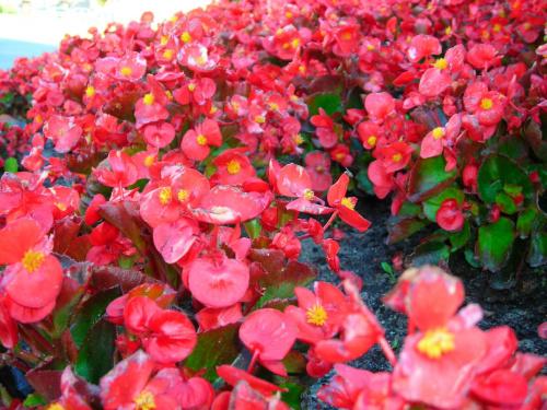 #kwiaty #przyroda #rośliny