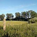 Były poligon WOP #słup #graniczny #granica #zielona #zieleń #drzewa #łąka