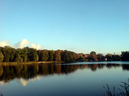 Widok #woda #jezioro #odbicie #park #niebo