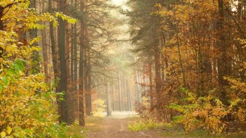 jesień w lesie #jesień