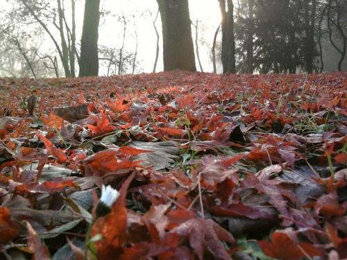 ...czerwony dywan zaprasza do snu...:-)