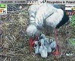 http://images37.fotosik.pl/125/990b16de5b7814d6m.jpg