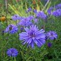 kwiat kwiaty roślina #wiosna #kwiat #roślina #przyroda #kwiaty