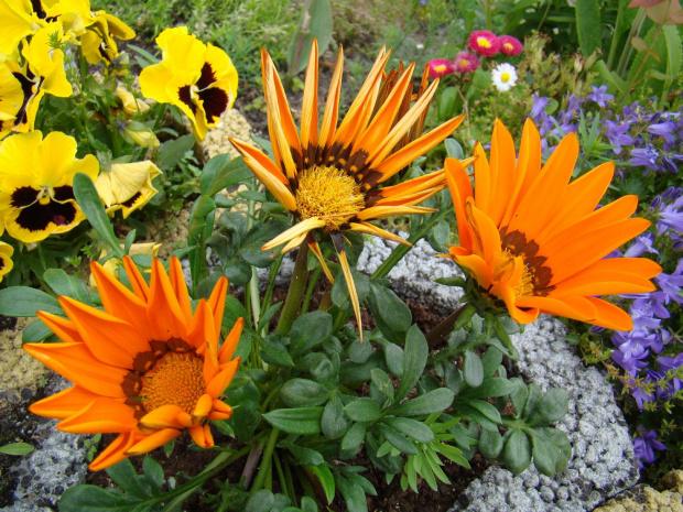 Kwiaty.... #kwiaty #ogród