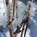 Lodowy kwiatostan ;) #góry #lód #pączki #sople #wiosna #zima