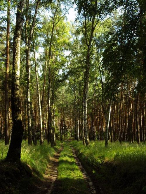 #natura #las