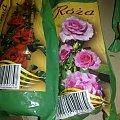 róża rabatowa #krzewy