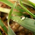kropla wody #deszcz #krople #ślimak #trawa #woda