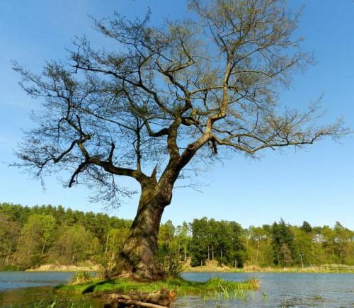 """""""Magiczne drzewo"""""""