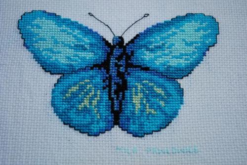 niebieski motyl dla Agnieszki