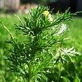 #roslina #zielono #zielona #trawa