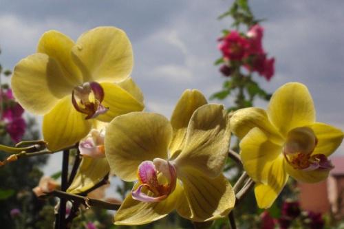 #Kwiaty #ogrod #natura