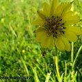 :) #kwiaty #pszczoła #żuk