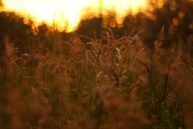 #zachod #slonca #zachód #słońca #trawa