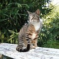 #koty #kot #adopcja #adopcje #zwierzęta #pomoc #Gliwice #schronisko #zaadoptuję #przygarnę #kotki #kocięta