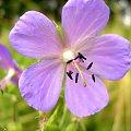 #makro #rośliny #zwierzęta #pióro