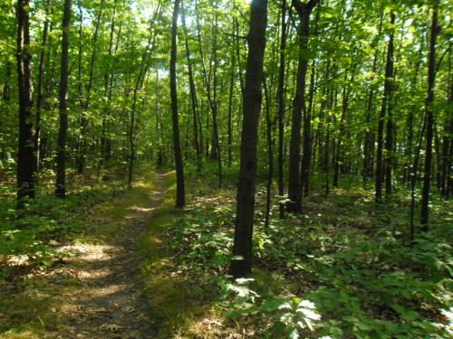 Przyroda #drzewa #las #przyroda #natura #rośliny #liść #lasy #słońce