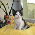 Koty do adopcji #kot #koty #kotka #przygarnę #adoptuję #Gliwice #schronisko