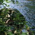 Głaz na Welku okolice Jakubkowa #wel #rzeka #kajaki #jakubkowo