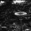 smakołyk w cieniu #CzubajkaKania #grzyb #jesień #las #natura #przyroda #sowa