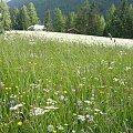 #góry #kwiaty #łąka #przyroda #tapeta #natura #piękne