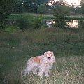 IX 2004 - nad Odrą #Dudi #Dudinka #pies #psica