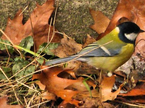 #jesień #ptaki