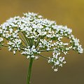 chyba ostatni w sezonie #flora #kwiat #macro