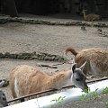 #zoo #łódzkie