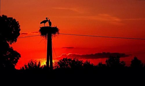 - Kle kle, posadź wreszcie dupsko na jajka, a ja skoczę po ostatnią już dziś żabkę... #ptak #bocian #gniazdo #zachód