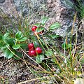 #przyroda #borówka #owoc