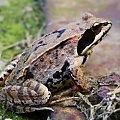 na dobry pocz ątek dnia żabcia dla Was ;D #żaba #makro #płaz