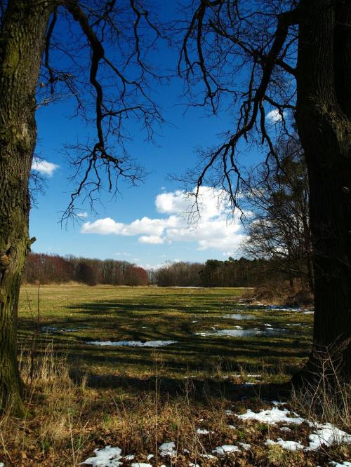 Polanka #błękit #drzewa #las #niebo #wiosna