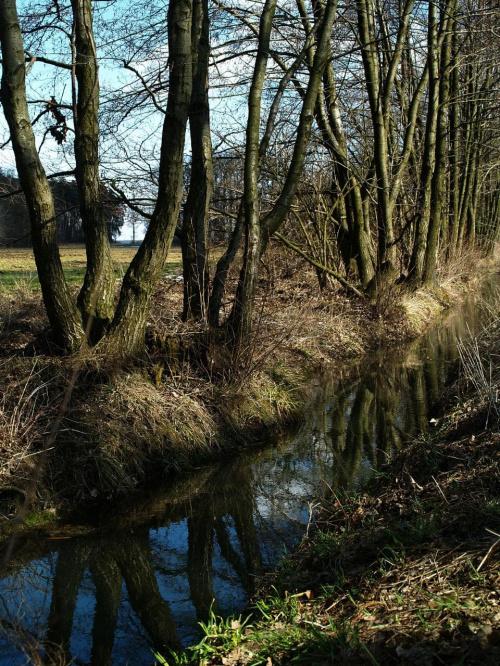 Wiosną po roztopach #błękit #drzewa #las #niebo #wiosna