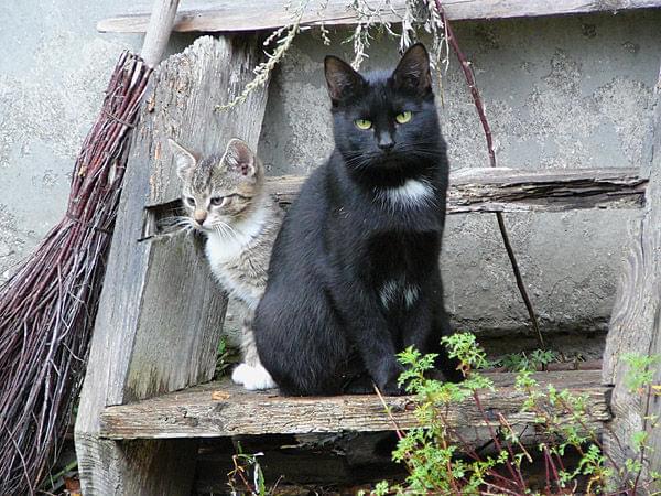Koty szukajÄ… domu