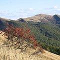 Ładnie #Góry #Bieszczady #Rozsypaniec #Halicz #Tarnica