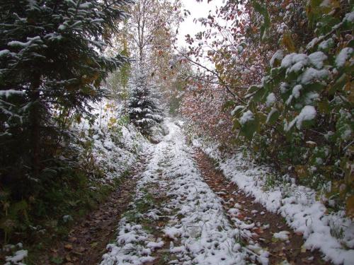 Pierwszy śnieg w OGW 14.10.2009