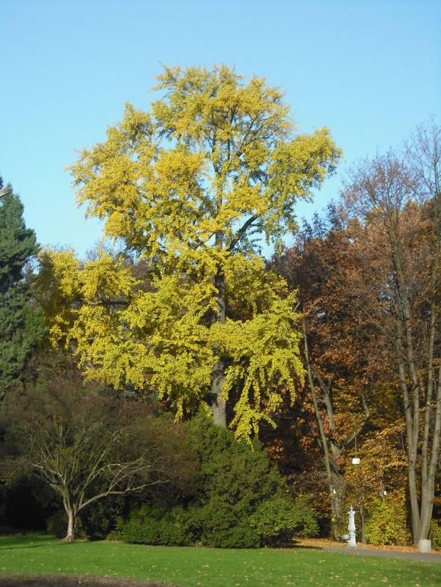 jesień w parku #jesień #park #drzewo #natura #przyroda