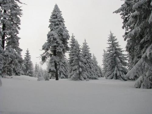 Żółtym szlakiem ze schroniska Pod Łabskim Sczytem #Karkonosze #góry #zima #śnieg #las