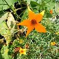 #kwiat #natura #róża #wyostrzone #sharpen #dokładność #piękno #cud #sad #zakwit #drzewko #wioska #żółto #żółć