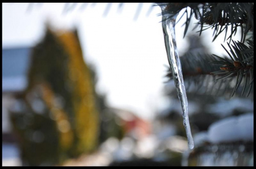 #lód #sopel #zima #wiosna #drzewo #drzewa #niebo #chmury #natura