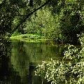 Warta - okolice Mirowa k.Częstochowy #Krajobrazy #Widoki #Rzeka #Warta