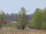 http://images37.fotosik.pl/281/e85d8c8d8dc9a240m.jpg
